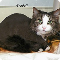 Adopt A Pet :: Gradall - Dover, OH