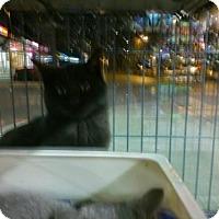 Adopt A Pet :: Cole - Hamilton, ON