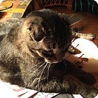 Adopt A Pet :: Speedie - Sanford, ME