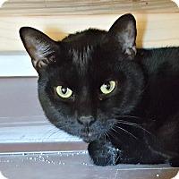 Adopt A Pet :: Gilbert - Chesapeake, VA