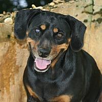 Adopt A Pet :: Xena - Seguin, TX