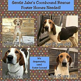Coonhound Dog for adoption in Ontario, Ontario - FOSTERS NEEDED!