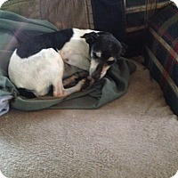 Adopt A Pet :: Molly - Shannon, GA
