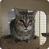 Adopt A Pet :: Blossom - El Dorado Hills, CA
