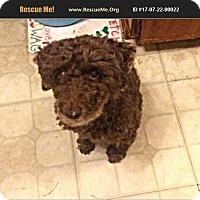 Adopt A Pet :: Fozzie - LaBelle, FL