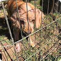 Adopt A Pet :: Marvella - Rexford, NY