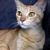 Adopt A Pet :: Kelsey - Kailua-Kona, HI