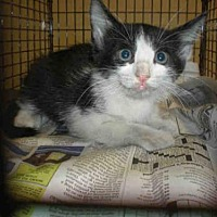 Adopt A Pet :: A757849 - Austin, TX