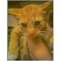 Adopt A Pet :: Riley - Owasso, OK