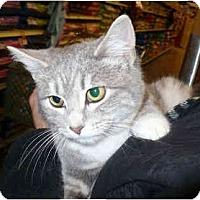 Adopt A Pet :: Tristin - Colmar, PA