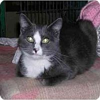 Adopt A Pet :: Theo - Pascoag, RI
