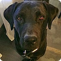 Adopt A Pet :: Chance~ Courtesy post - Phoenix, AZ