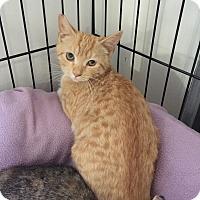 Adopt A Pet :: Johanna - Speonk, NY