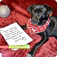 Adopt A Pet :: Gunner - Bristol, TN