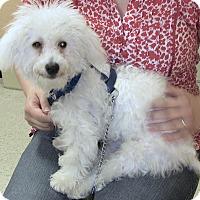 Adopt A Pet :: Lando - East Hanover, NJ