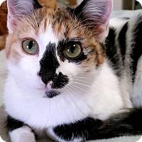 Adopt A Pet :: Livvy - Edmond, OK