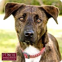 Adopt A Pet :: Fred - Marina del Rey, CA