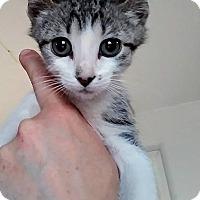 Adopt A Pet :: Possum - Levelland, TX