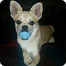 Adopt A Pet :: Tinkerbell