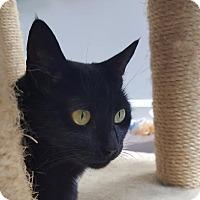 Adopt A Pet :: Violet - Winston-Salem, NC