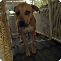 Adopt A Pet :: Poppy - Newnan City, GA