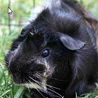 Adopt A Pet :: *Urgent* Theodore - Fullerton, CA