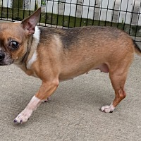 Adopt A Pet :: Blossom - Holliston, MA