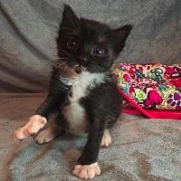 Adopt A Pet :: Raylan - Ocala, FL