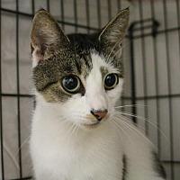 Adopt A Pet :: Collie - Asheville, NC