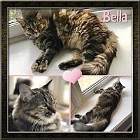 Adopt A Pet :: Bella - Jeffersonville, IN