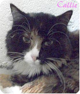 Calico Cat for adoption in Ozark, Alabama - Callie