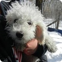 Adopt A Pet :: Benson ADOPTED!! - Antioch, IL