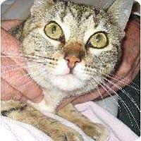 Adopt A Pet :: Lucky (HL) - Schertz, TX