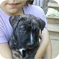 Adopt A Pet :: Frannie - Reisterstown, MD