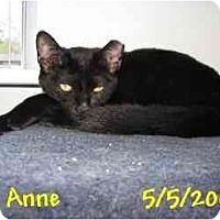 Adopt A Pet :: ANNE - AUSTIN, TX
