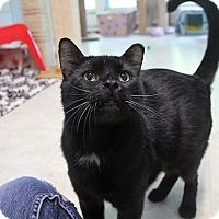 Adopt A Pet :: Roman Polanski - Chicago, IL