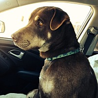 Adopt A Pet :: MURPHY - Pena Blanca, NM