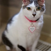 Adopt A Pet :: Pookie - Washougal, WA