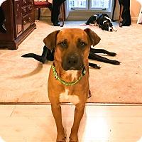 Adopt A Pet :: Thelma - Manhasset, NY