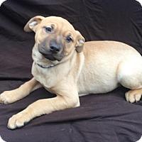 Adopt A Pet :: Gypsy - East Sparta, OH