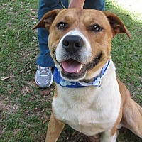 Adopt A Pet :: S1104    Rusty - Bay Springs, MS
