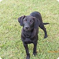 Adopt A Pet :: Sister Mary Patrick - Boston, MA