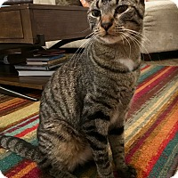 Adopt A Pet :: Peter Criss - St. Louis, MO