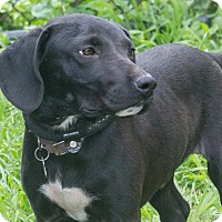 Adopt A Pet :: Maynard - Elmwood Park, NJ