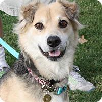 Adopt A Pet :: Mara - Marion, AR