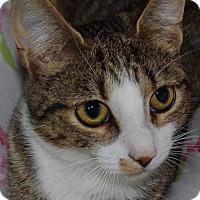 Adopt A Pet :: Lynx - Nashville, IN
