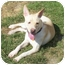 Photo 1 - Pit Bull Terrier/Shepherd (Unknown Type) Mix Dog for adoption in Appleton, Wisconsin - Fred