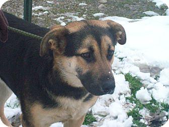 German Shepherd Dog Mix Dog for adoption in Paris, Illinois - Mitch