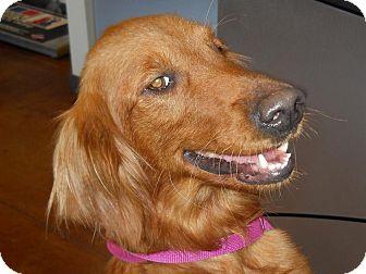 Golden Retriever Dog for adoption in BIRMINGHAM, Alabama - Gidget