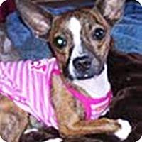 Adopt A Pet :: Adrian - Duluth, GA